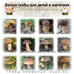 осенние грибы названия и фото
