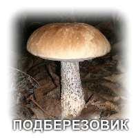грибы съедобные картинки для детей с названиями